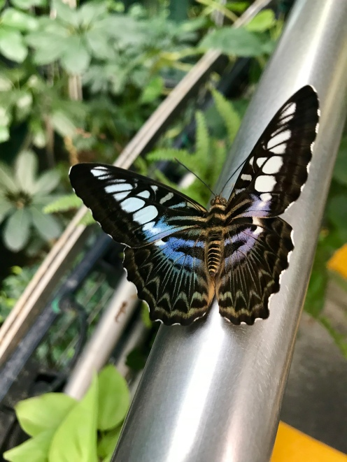 The butterfly garden in ChangXi Airport